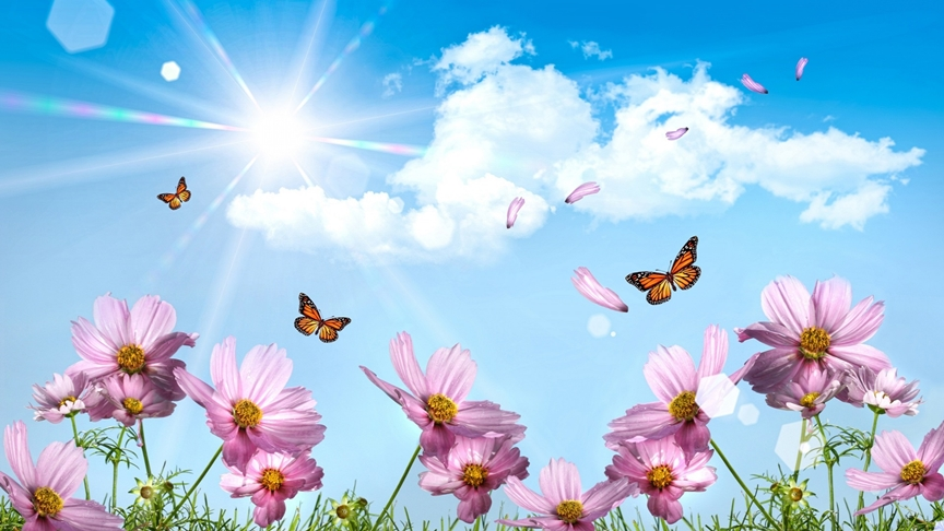 Butterflies-And-Cosmos-Flowers[1]2.jpg
