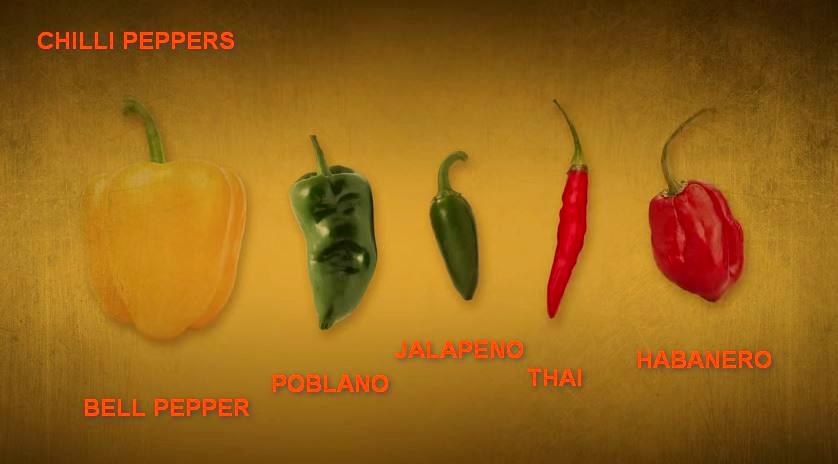 chilli-types2.jpg