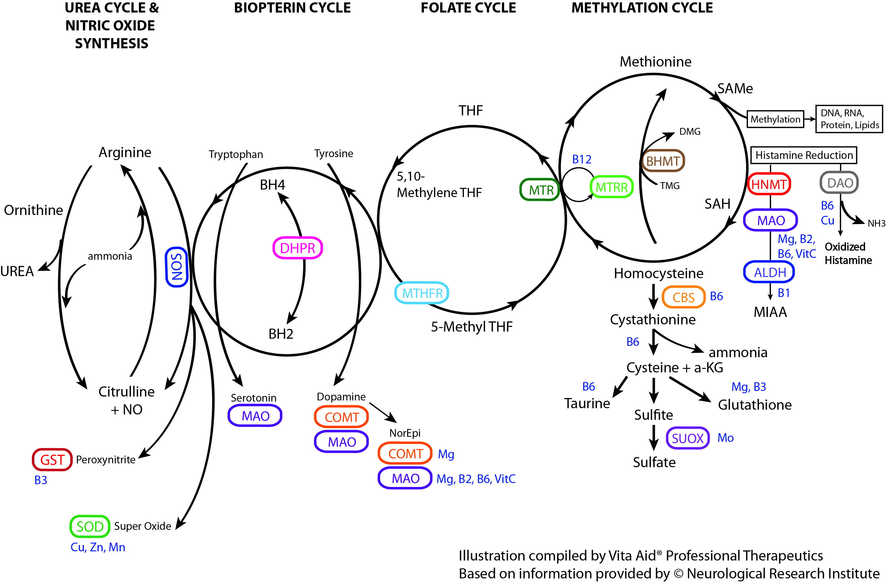 Methylation Cycle Collateral Pathways.jpg