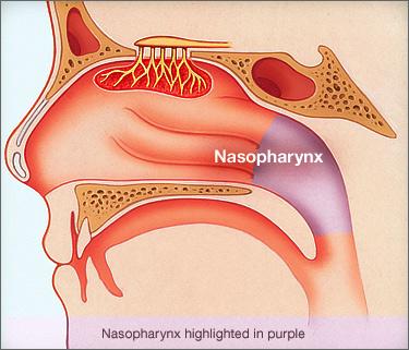 nasopharynx.jpg