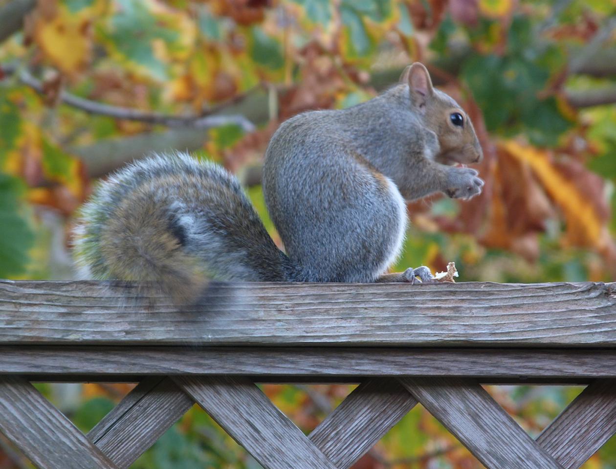 squirrel mom 1.jpg