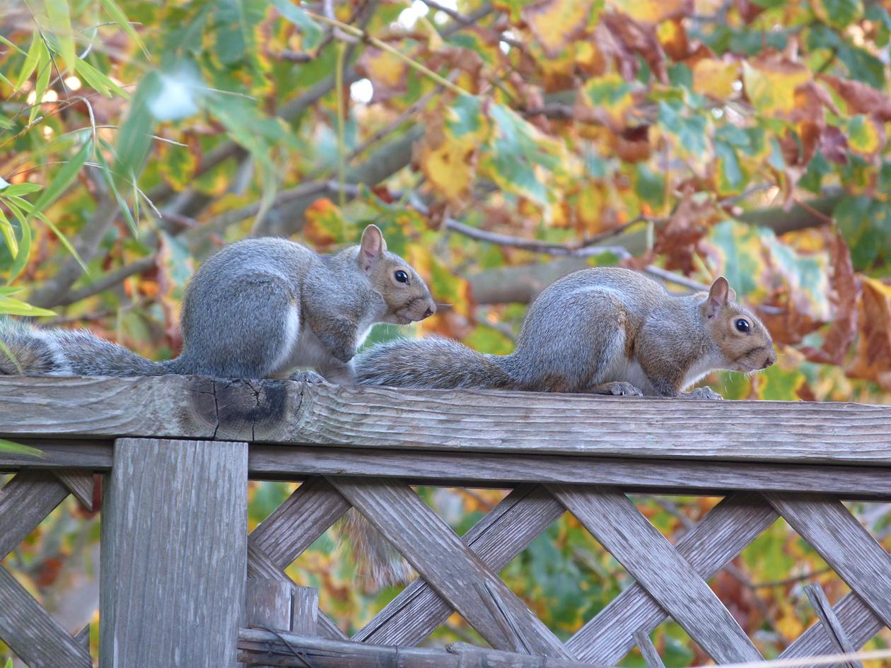 squirrel sibs 2.jpg