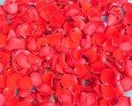 red-rose-petals-2.jpg