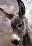 Donkey 1..jpg