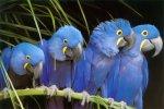 macaw-flock-lg..jpg
