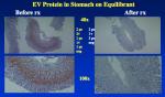 Oxymatrine Slide 8.png