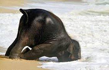 elephant over.jpg