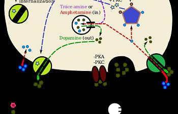 TAAR1_Dopamine.svg.png